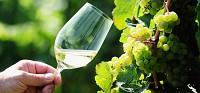 Винодельное поместье в Германии (Хессен)