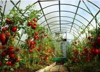 Тепличный комплекс в Болгарии.