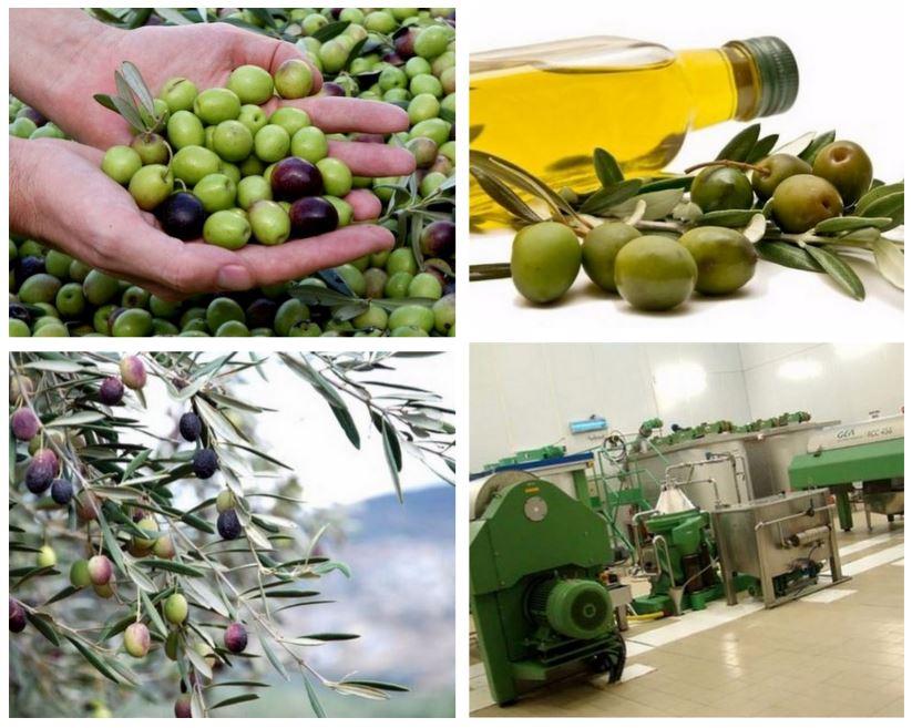 Производство оливкового масла, Португалия