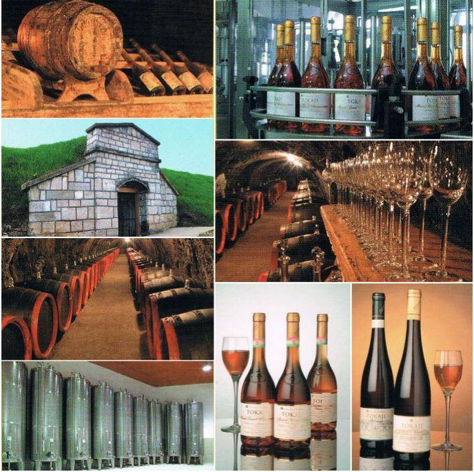 Продается винное производство в Венгрии.