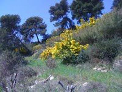 Участок в 8 км от Бордигера, Лигурия, пограничный с Францией город на Лазурном берегу.